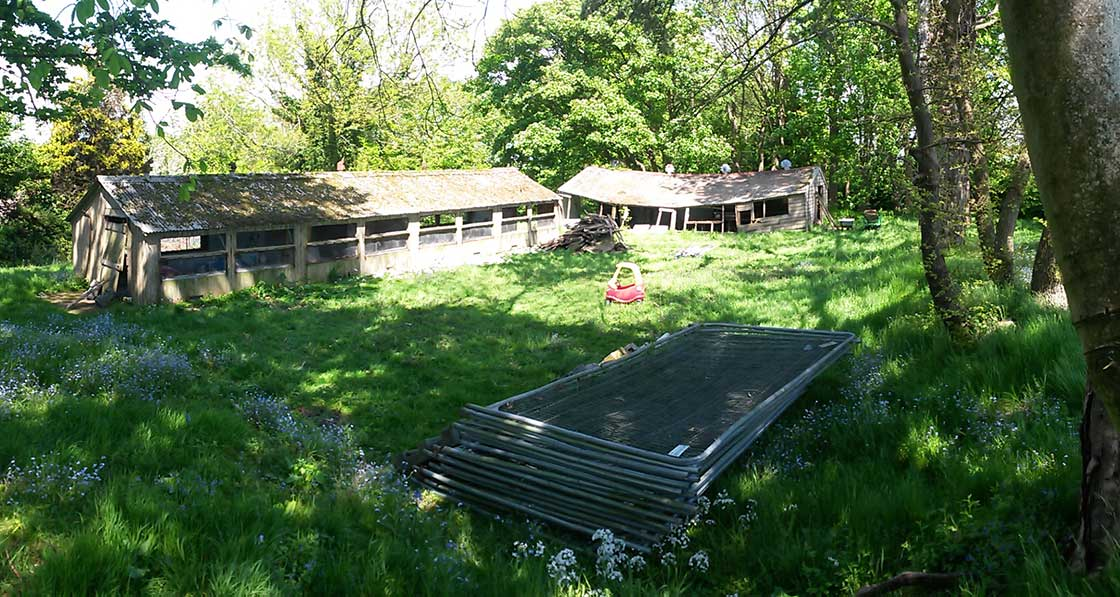 The dilapidated chicken sheds that were originally on the site